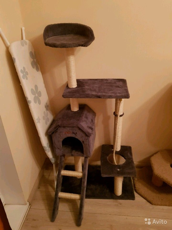 Дом для кошек.  Москва