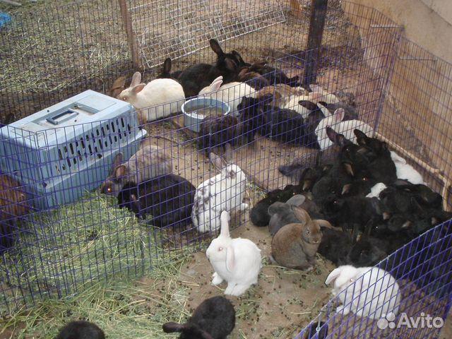 Разведение крольчат в домашних условиях