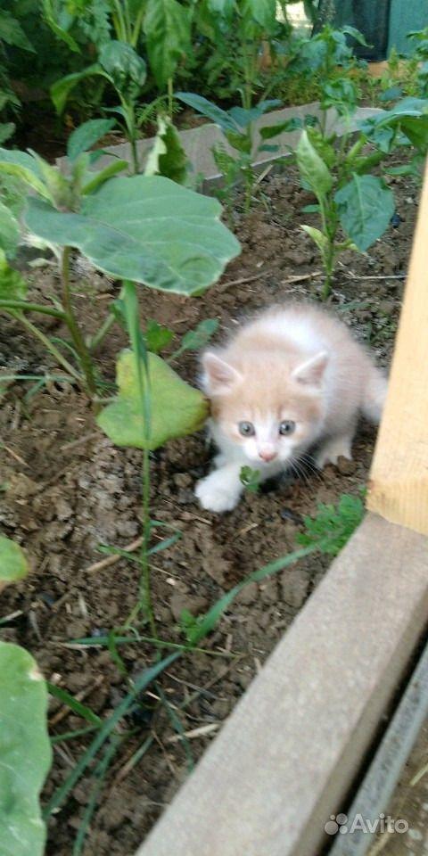 Отдам котят в Анапе - фотография № 2