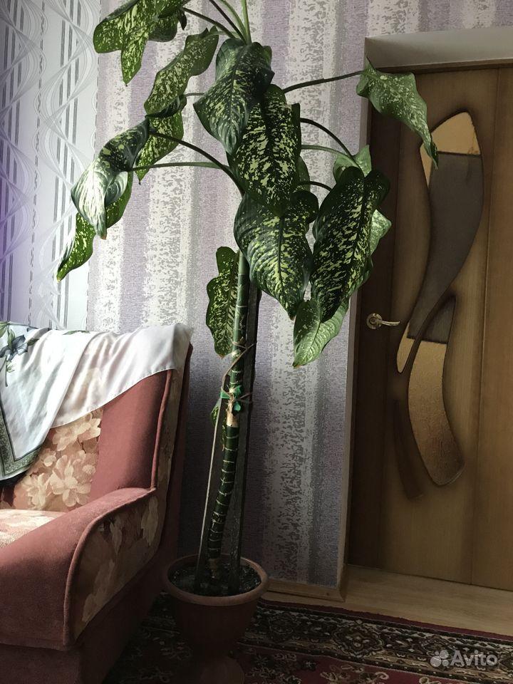 Растения для дома и офиса.цена договорная купить на Зозу.ру - фотография № 1