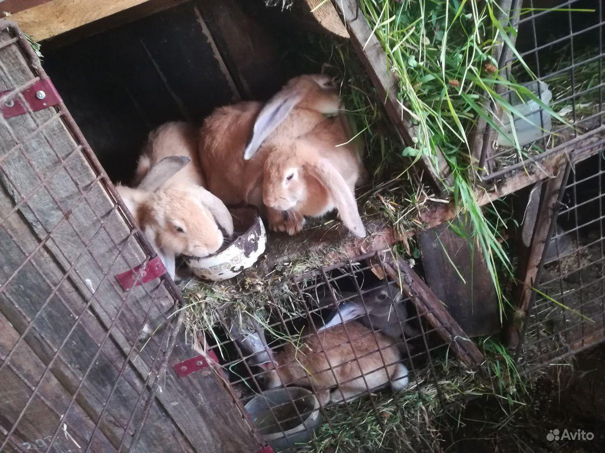 Кролики разного возраста и породы