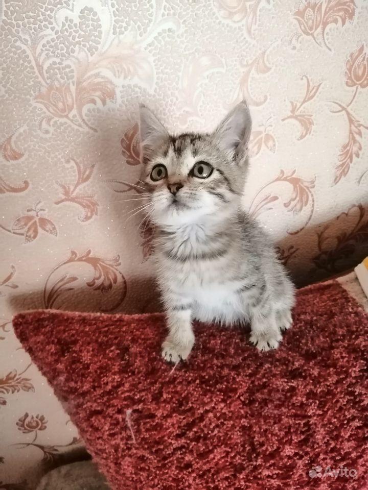 Котенок-девочка ищет дом