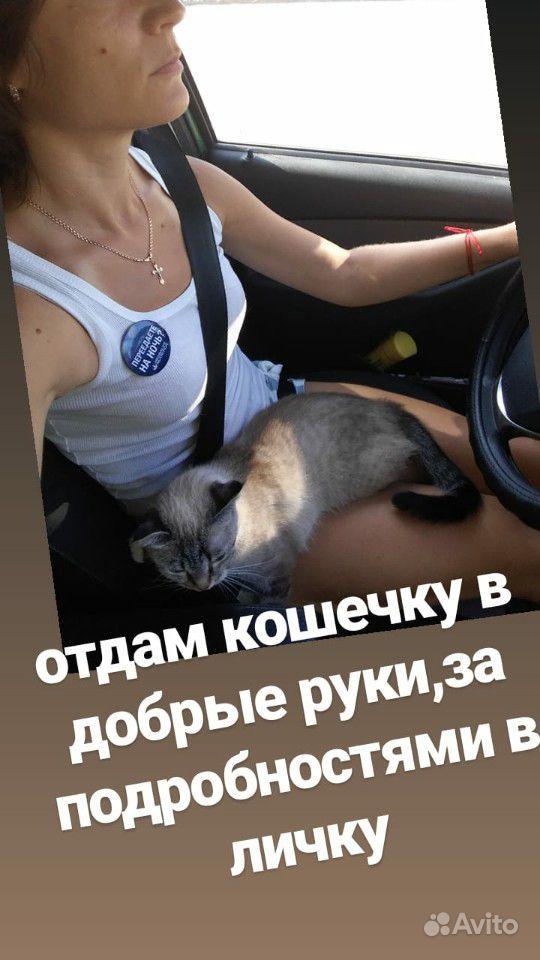 Отдам кошку
