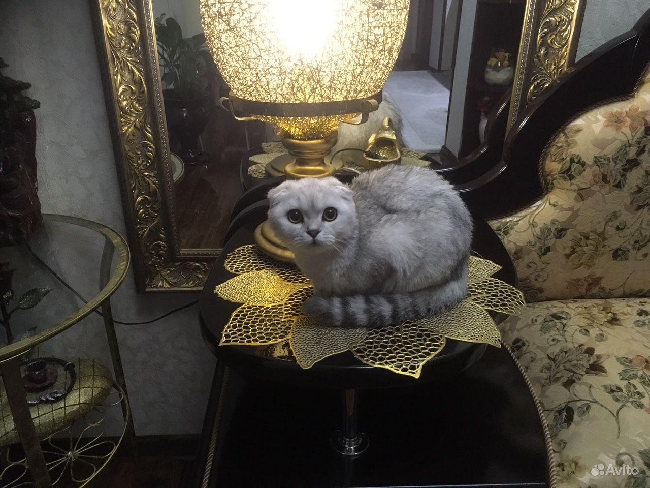 Продается Кошка - фотография № 1