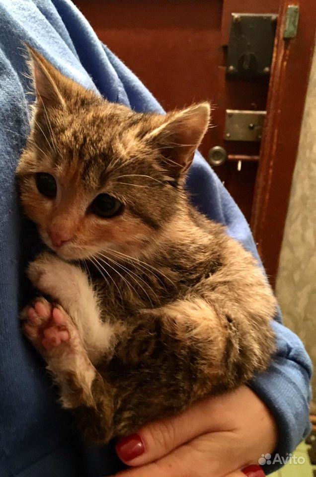 Котёнок-девочка в дар - фотография № 1