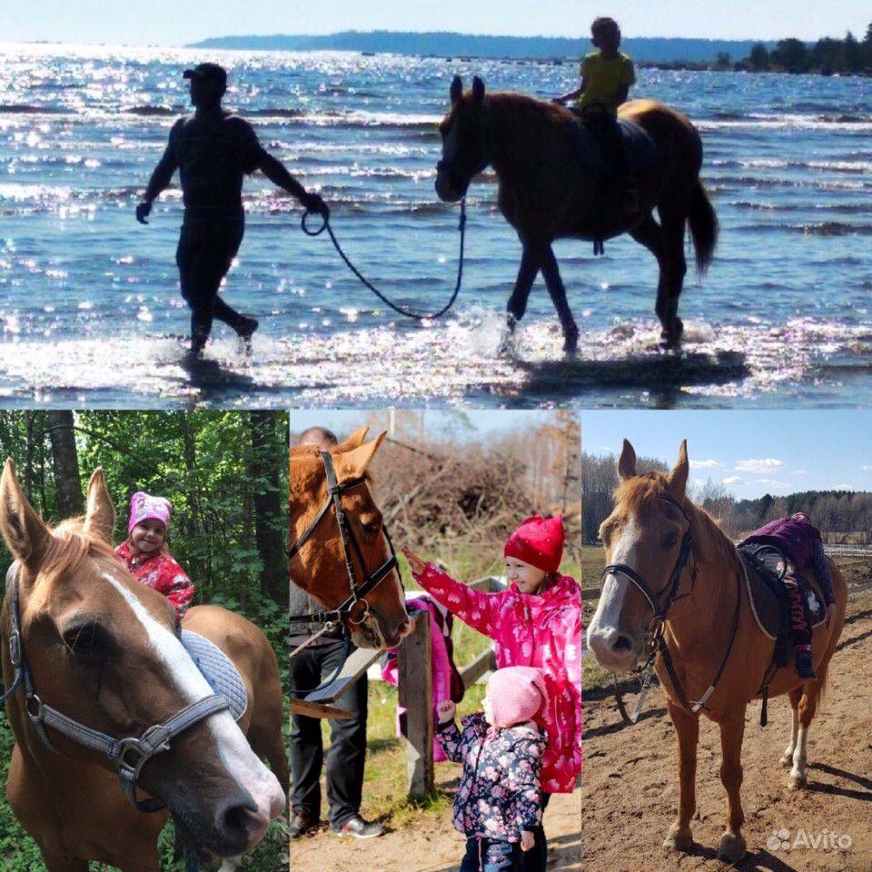 Конные прогулки и занятия верховой ездой купить на Вуёк.ру - фотография № 1
