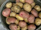 Продам домашний картофель, рассыпчатый, очень вкус