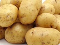 Продам картофель частные объявления красноярск машины газель перевозки частные объявления