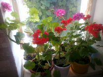Цветы опт цена в новокуйбышевске, самые красивые букеты учителю