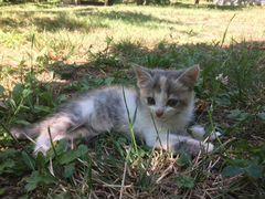 Котята в дар (милые мутанты)