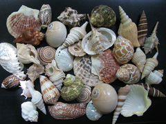 Раковины морские для аквариума