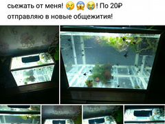 Продам скалярий размер туловища, как 1 рубль