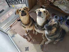 Отдадим в добрые руки щенков 9 мес