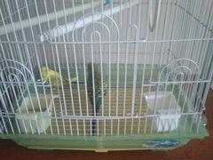 Милые попугайчики