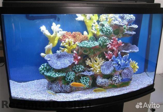 бесплатные аквариумы