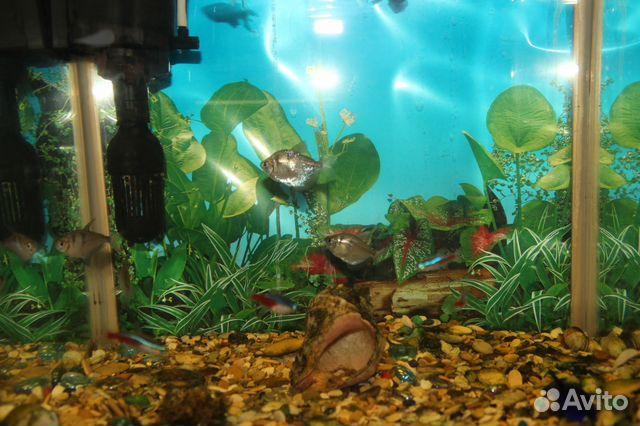 35 л аквариум цена: