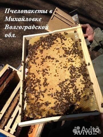 Пакет в основном содержит молодую пчелу, которая обсиживает расплод.