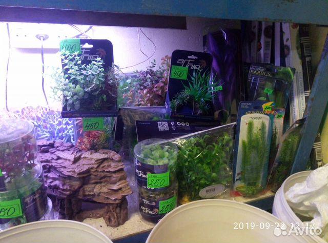 Decorations for aquarium 89081257208 buy 2