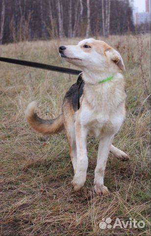 Собака щенок Эви в добрые руки бесплатно купить на Зозу.ру - фотография № 3