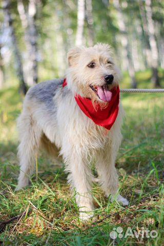 Собака неженка Иви в добрые руки купить на Зозу.ру - фотография № 4