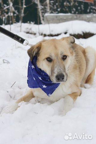 Добрый и внимательный пёс Лари ищет семью купить на Зозу.ру - фотография № 2