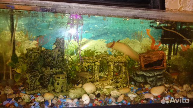 Аксолотль - водяное чудовище купить 1
