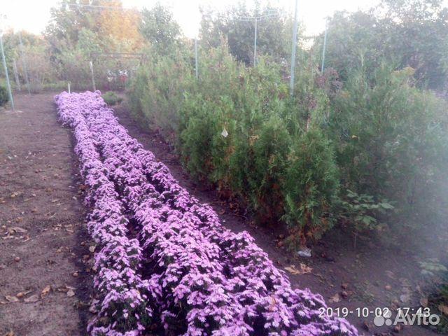 Растения декоративные