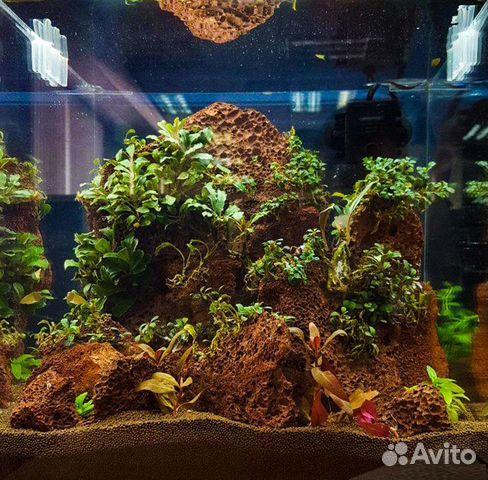 Вулканическая Лава камни 1 - 5 кг для аквариума 89504050813 купить 5