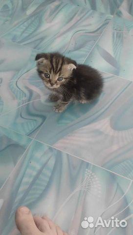 Полосатые котята  89270293230 купить 1