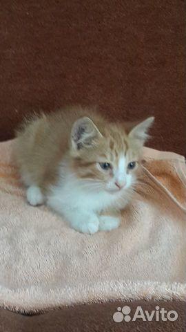 Котенок (мальчик)  89625017534 купить 5