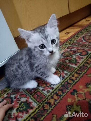 Кошка мышеловка отдам котят в добрые руки звоните  89628149299 купить 1