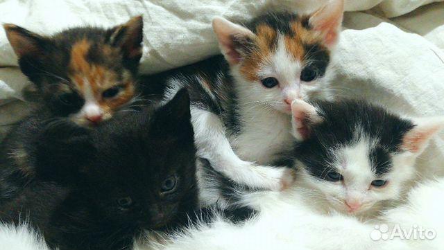 Котята на любой вкус  89879907788 купить 4