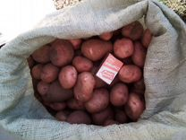 Картофель для скота