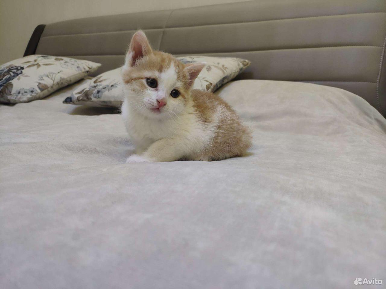 Кошка  89132463030 купить 5