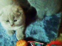 Плюшевые котята, 1,5 мес