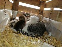 Котята кошки крысыловки