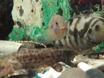Аквариум с рыбоми