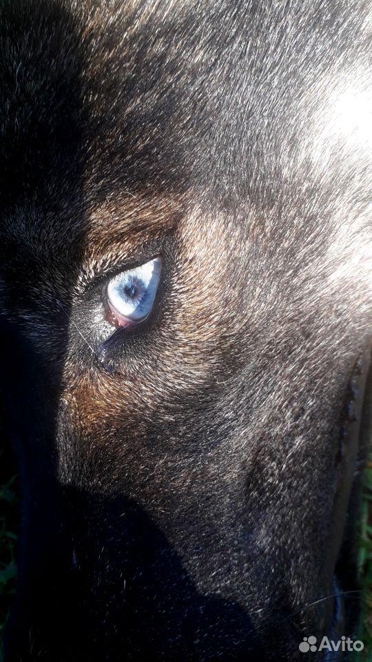 Глаза голубые-голубые  89107920315 купить 1