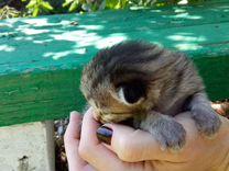 Котята в добрые, заботливые руки