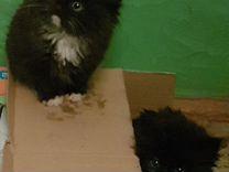 Шикарные котята. в добрые руки