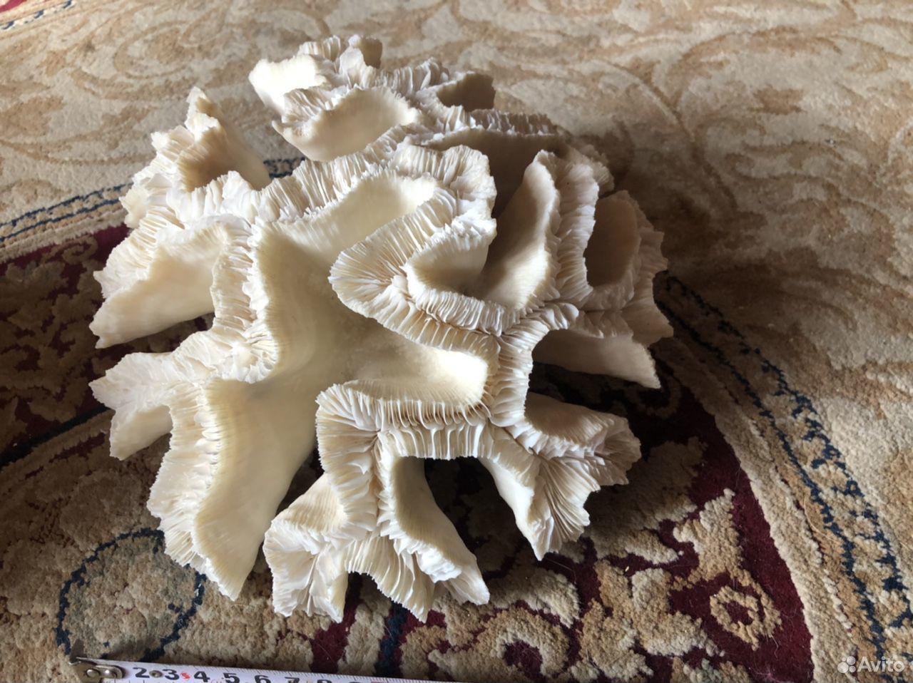 Коралл Open Brain