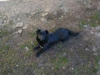 Бесплатно щенок девочка 7 месяцев